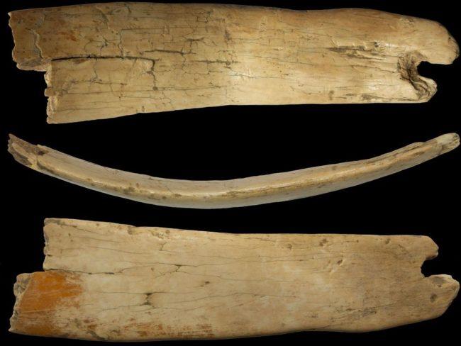 Наиболее крупный фрагмент диадемы из бивня мамонта в трех проекциях. Фото: сайт ИАЭТ СО РАН / www.archaeology.nsc.ru.